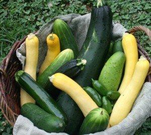 harvested veggies in basketveggies