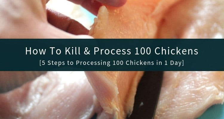 How To Kill and Process Chickens