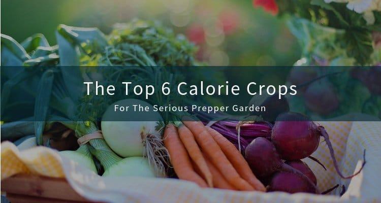 Top 6 Calorie Crops for Prepper Garden