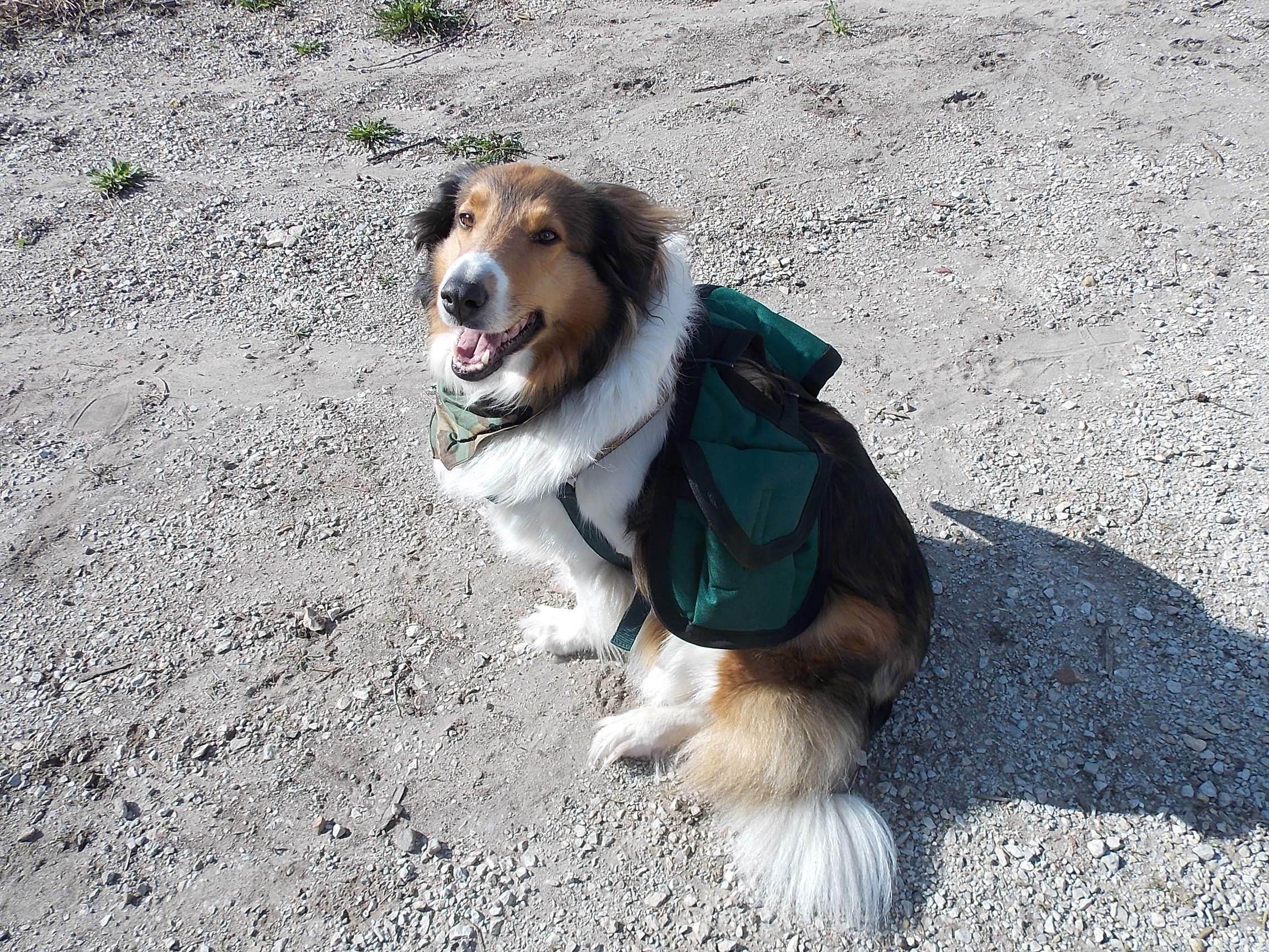 Jessica - Survival Dog Bug Out Bag
