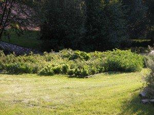 Garden 8-11