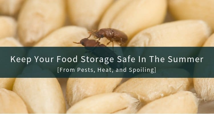 Keep Food Storage Safe in The Summer