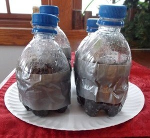 Pepsi Bottle Winter Sown Seeds