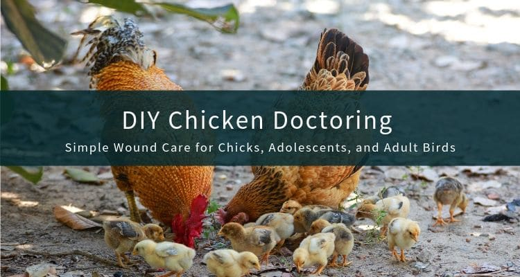 DIY Chicken Doctor Wound Care