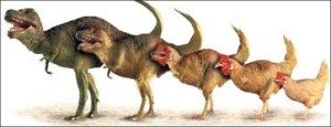 chicken to dinosaur