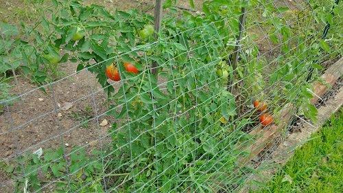 Vegetable Garden Rotation