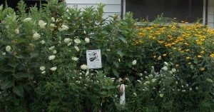 Moms pollinator garden