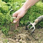 Garden Weed Control - A Primer