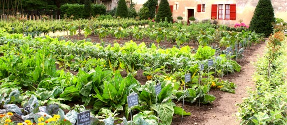 Row Gardening Easier More Bountiful than Square Foot