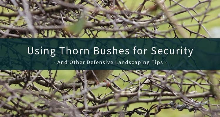 Defensive Landscaping Advice