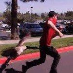 goose attacking man