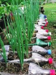 pop bottle plants 3