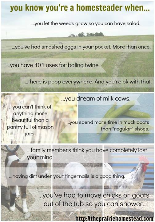 You Know You're a Homesteader When…