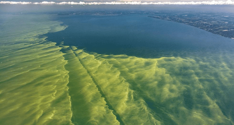 Algae Bloom Threatens Water Security for Ohio Residents