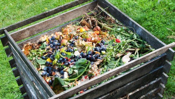 Compost for Garden