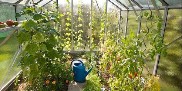 Greenhouse for Survival Garden