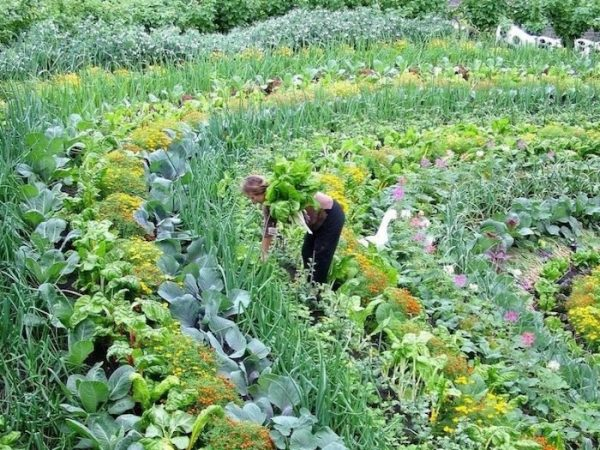 Greens and Micronutrients for Survival