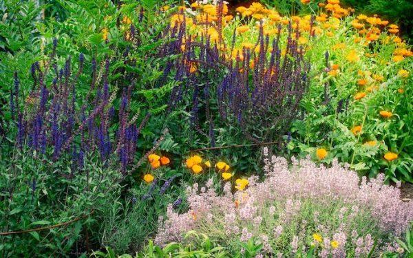 Medicinal Herb Garden for Survival