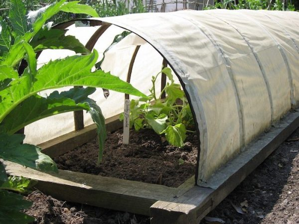 Row Covers for Gardening