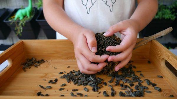 Saving Seeds for Survival Gardens