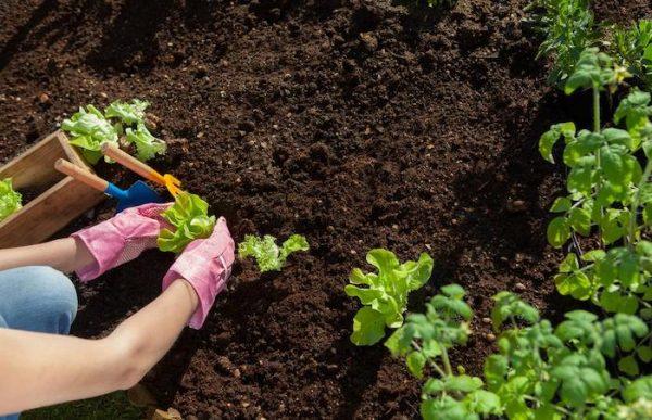 Soil For Gardening