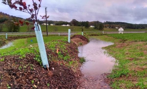 Swales for Permaculture Gardening