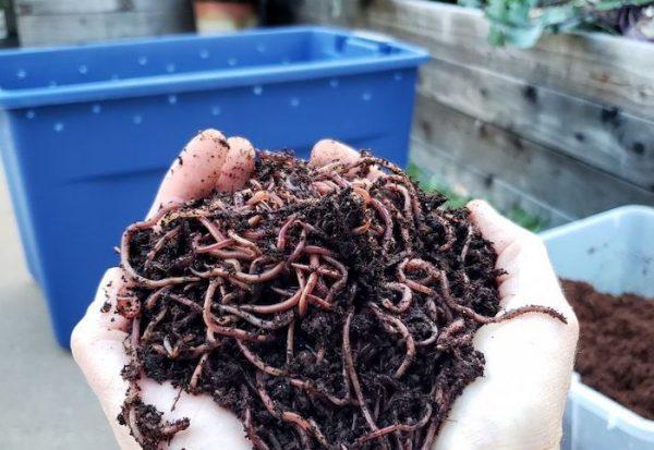 Vermicomposting for Gardening